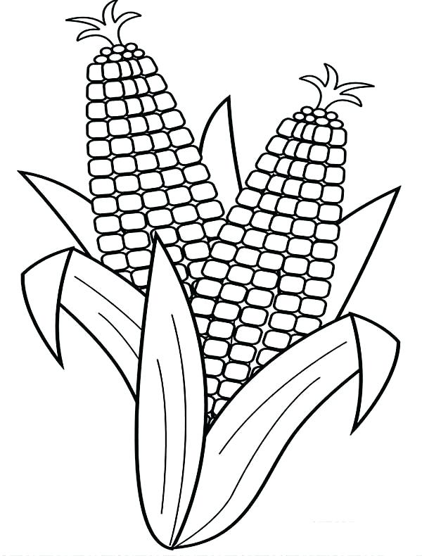 600x790 Corn Coloring