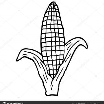 336x336 Corn Drawing Step