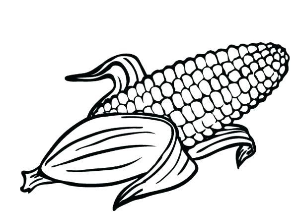 600x427 Corn Field Coloring