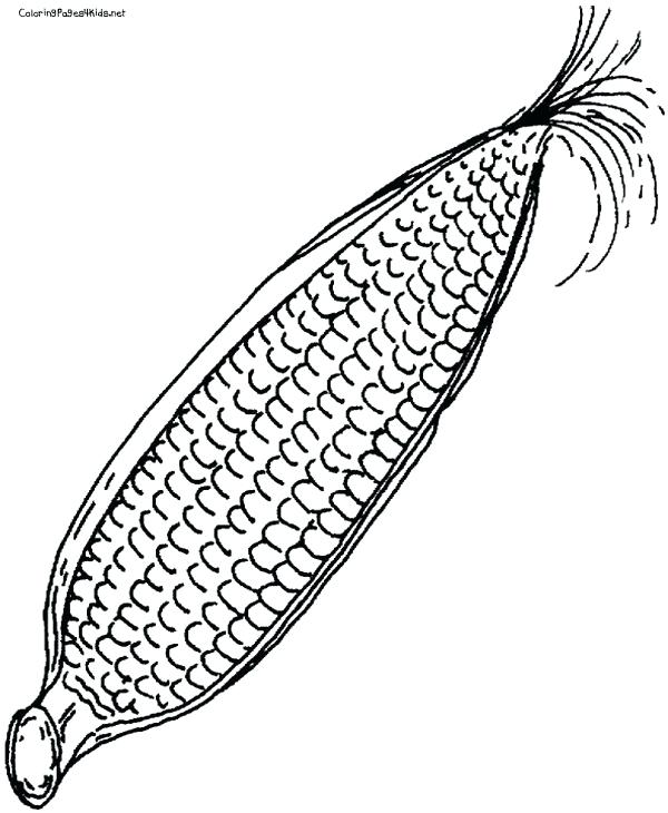 600x730 How To Draw Corn Corn Drawing Unicorn Step