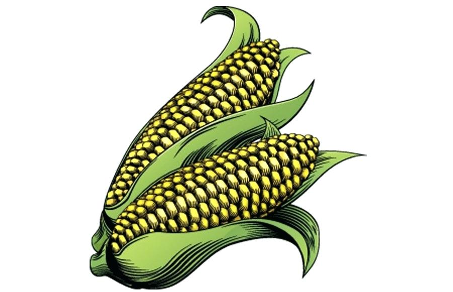 900x580 Corn On The Cob Drawing Corn On The Cob Corn Drawing Easy