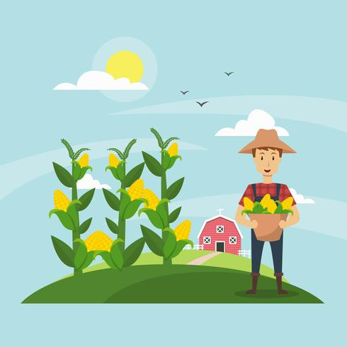 490x490 Corn Stalks Field And Farmer Illustration