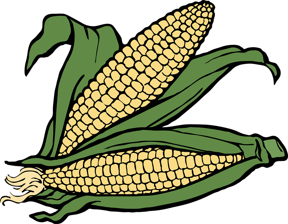 924x720 Field Clipart Maize Field