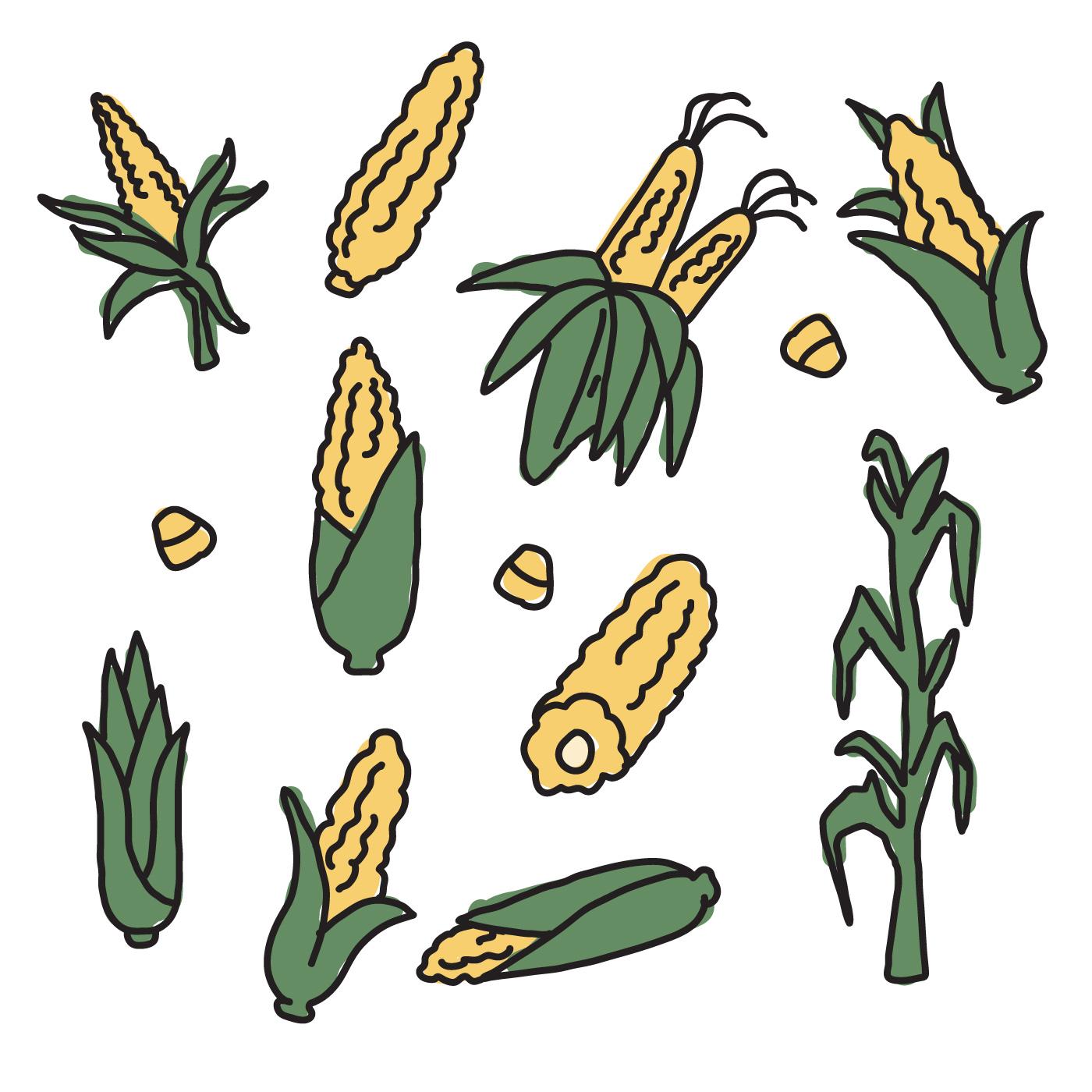1400x1400 Corn Drawings