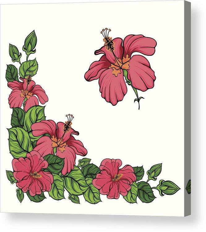 666x750 Hibiscus Flower Corner Vector Acrylic Print