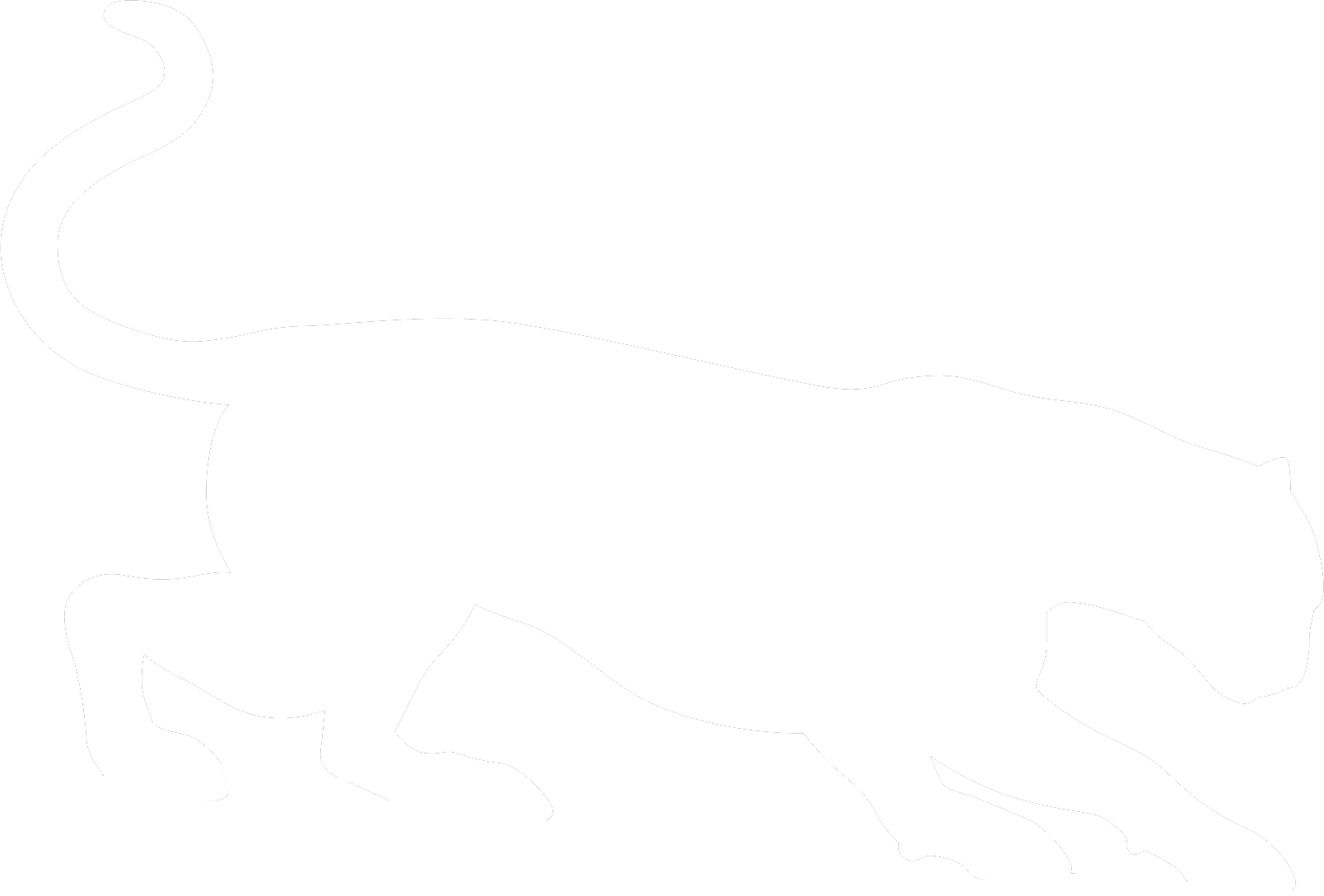 1608x1088 cougar drawing ocelot for free download