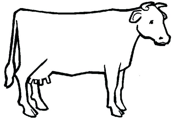 Cow Calf Drawing   Free download best Cow Calf Drawing on