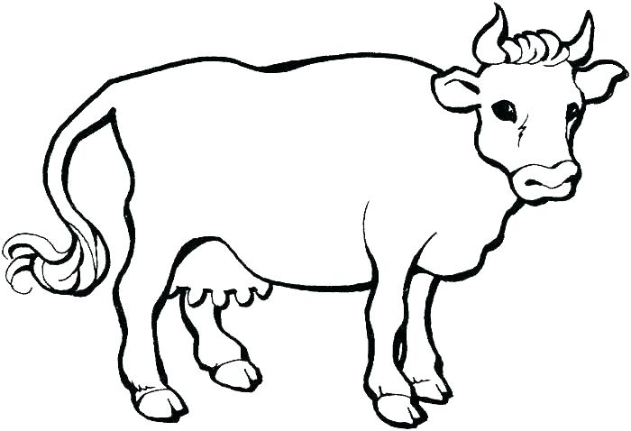 700x478 cow coloring pages coloring pages of a cow cow coloring pages cow