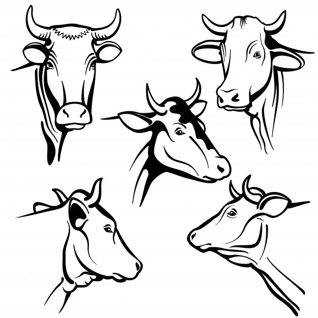 626x626 Cow Face Front Icons Free Download