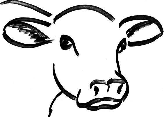 564x402 cow head drawing more make it cow painting, cow art, cow face