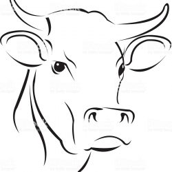 250x250 Cow Drawing Art Simple Cartoon Steps Skull Download I Fertility