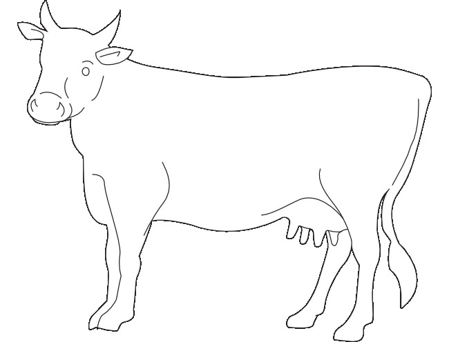 650x496 Cow Template