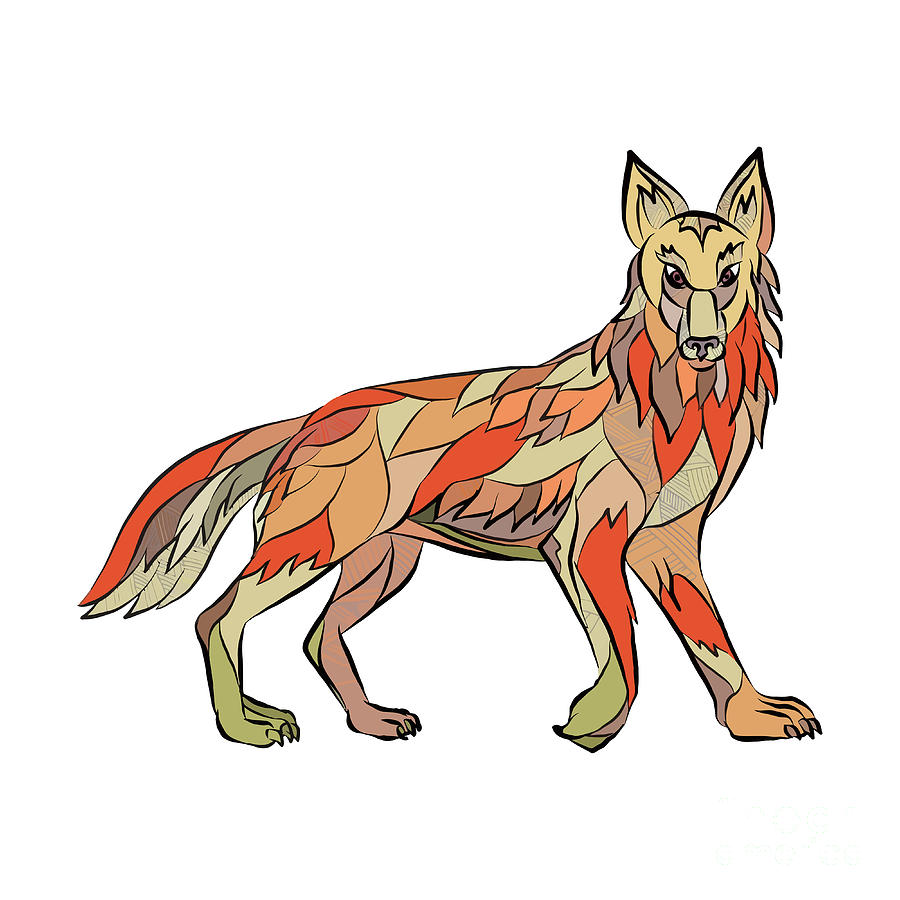 900x900 Coyote Side Isolated Drawing Digital Art