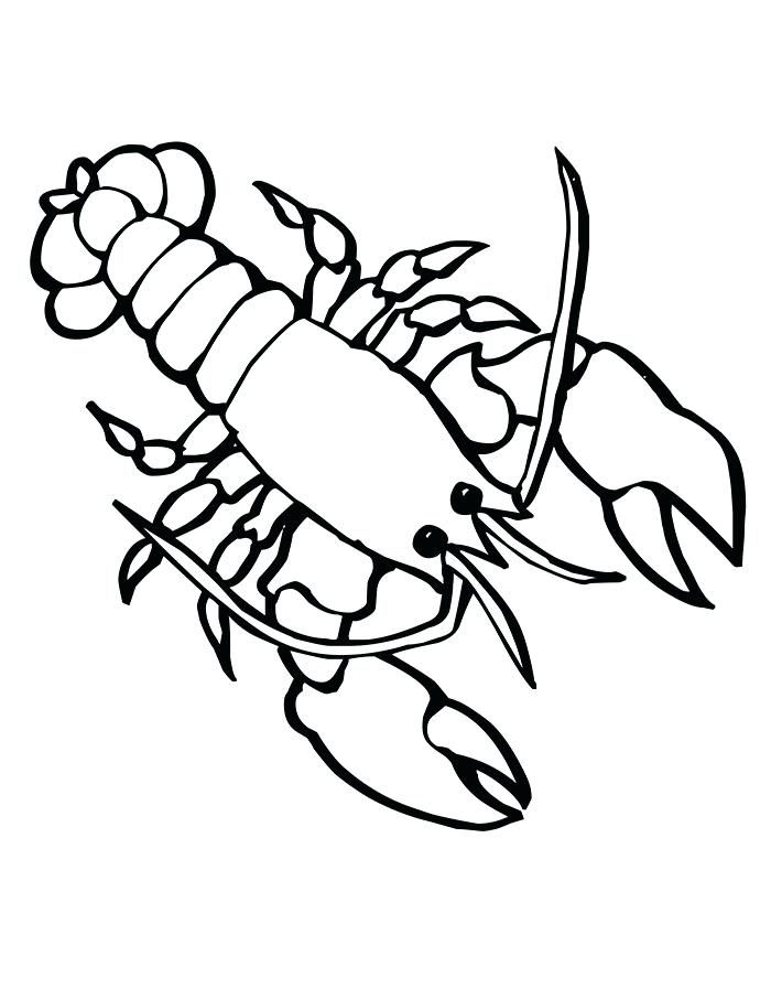 Crab Claw Drawing Free Download Best Crab Claw Drawing On