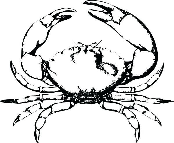 600x494 drawing of a crab crab drawing clip art crab download free