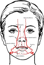Cranial Nerve Face Drawing With Numbers
