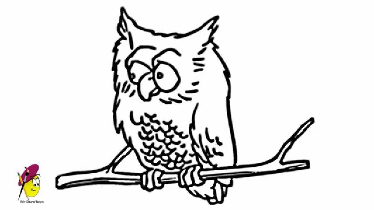 1280x720 Crazy Owl