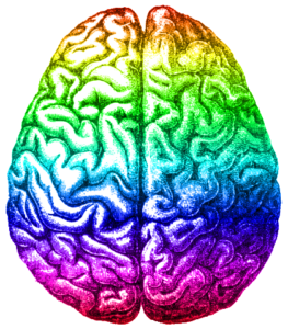 263x300 Collection Of Free Brain Drawing Creative Download On Ui Ex