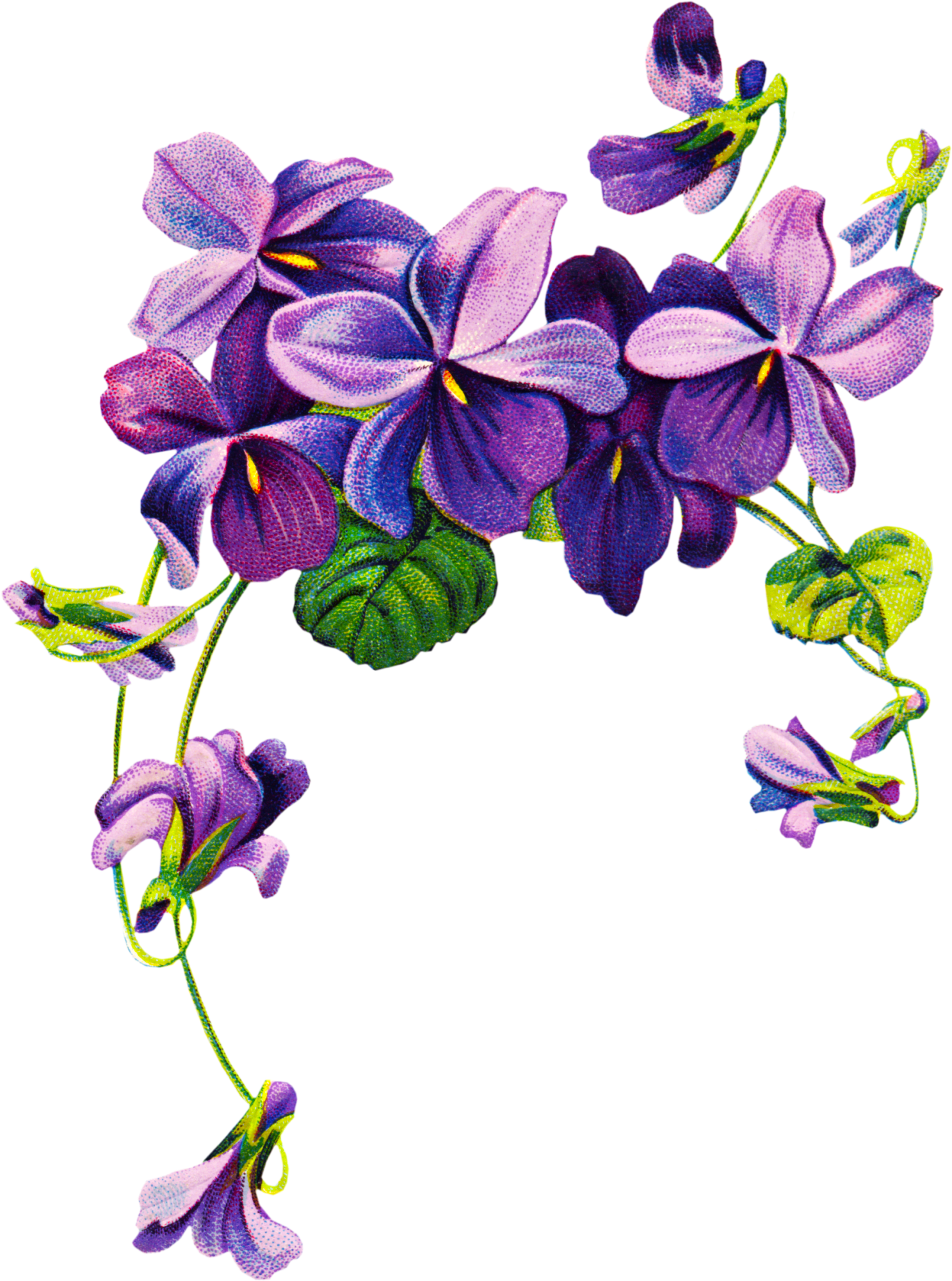 1487x2000 Violet Flower Tattoo Drawing Free Clipart, Vintage Graphics