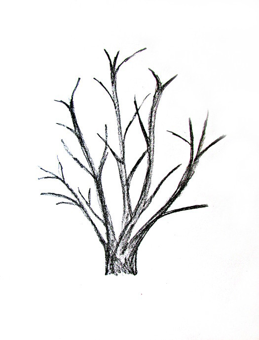 525x690 How To Draw A Tree