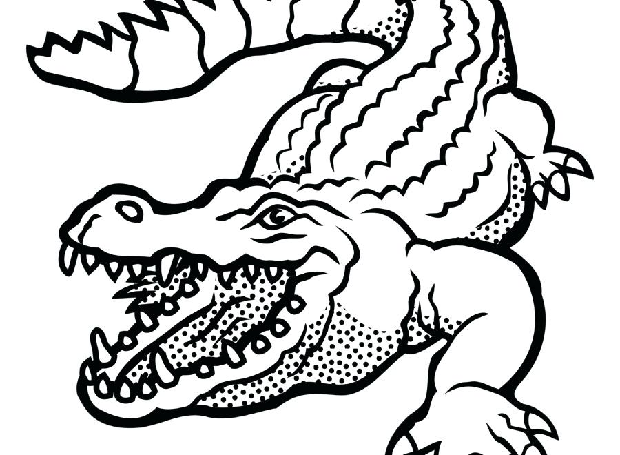 900x660 alligator drawing draw alligator how to draw a cartoon alligator