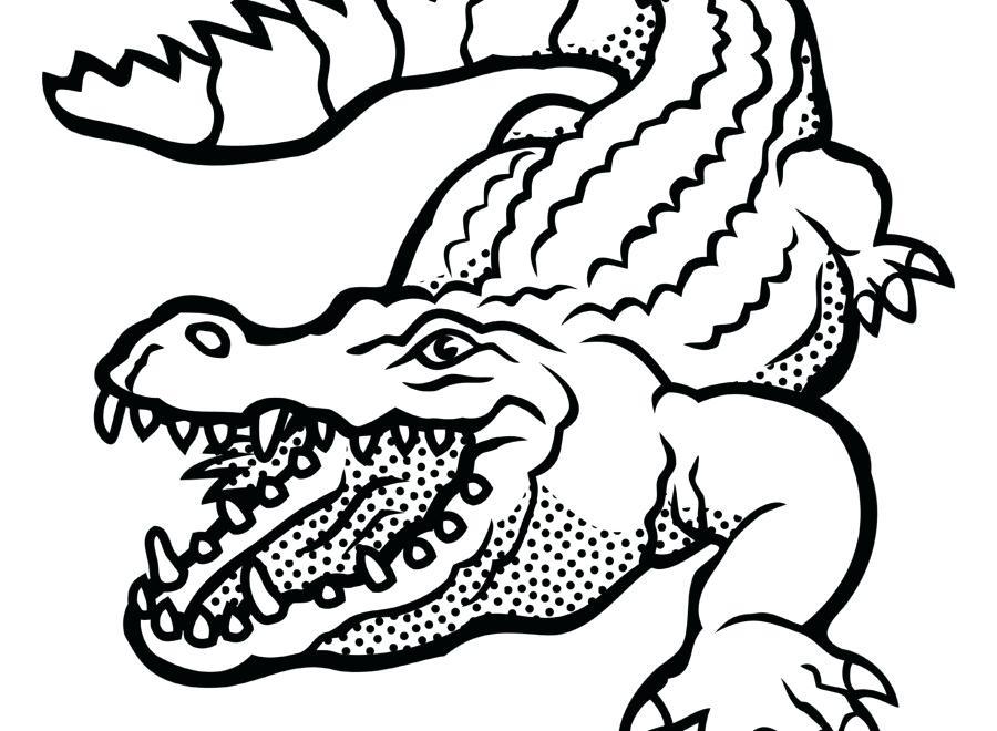 900x660 alligator drawing draw alligator how to draw a cartoon alligator