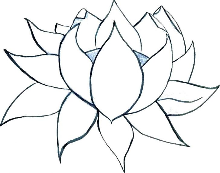 crocus flower drawing  free download on clipartmag