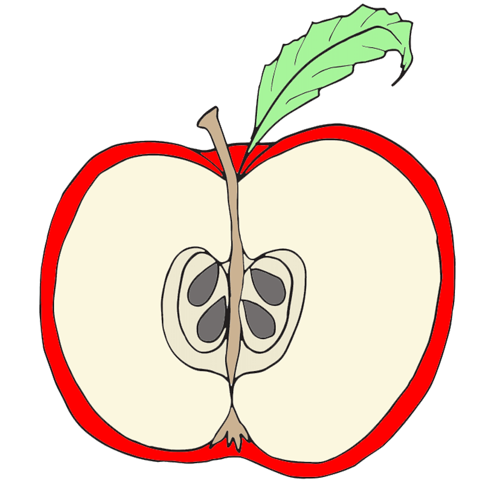 Cross Contour Drawing Apple
