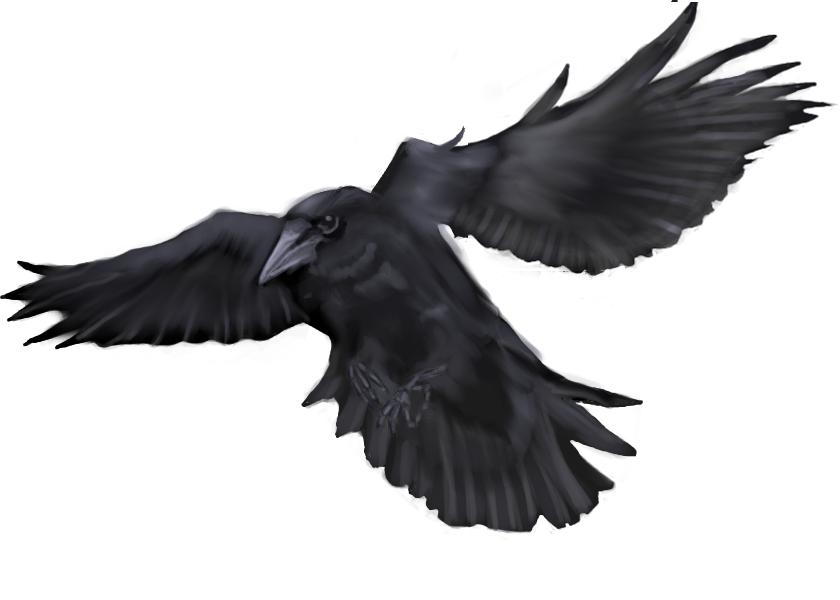 840x600 Flying Crow Tattoo Sketch Tattoo Ideas