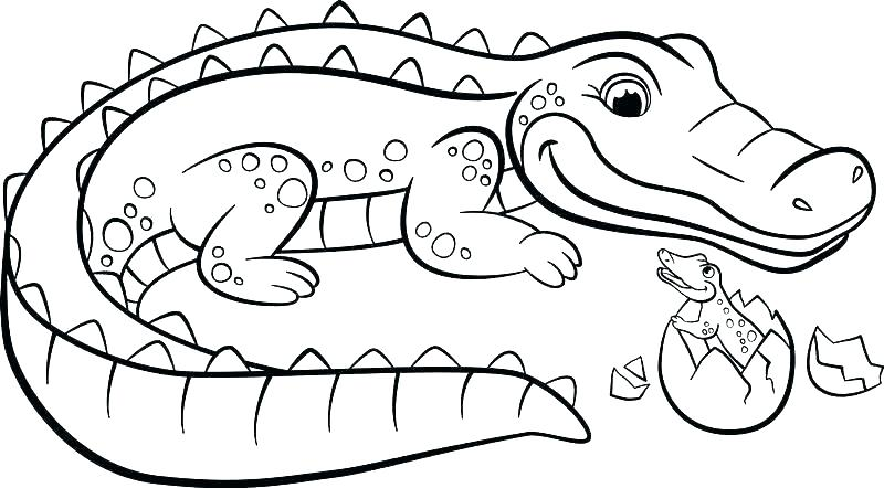800x442 Crocodile Drawing Cute For Free Download