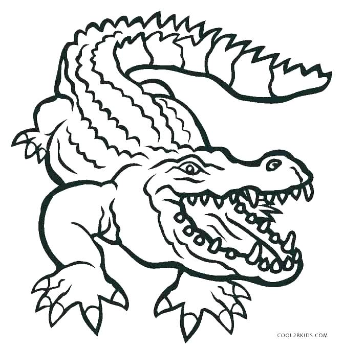 670x685 Cute Alligator Coloring Pages Es For Alligators Amazing Realistic