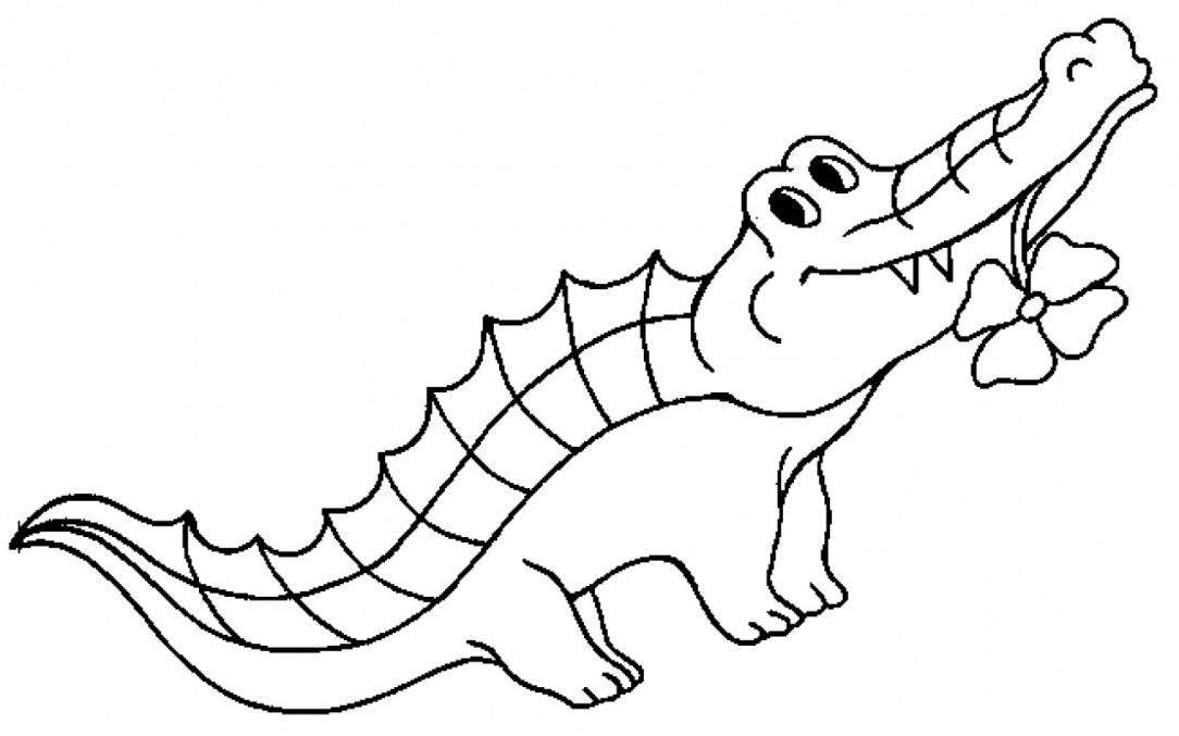 1084x677 Cute Alligator Coloring Pages Printable And Crocodile Realistic