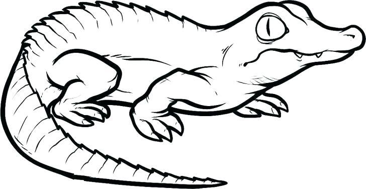 728x376 Alligator Coloring Book