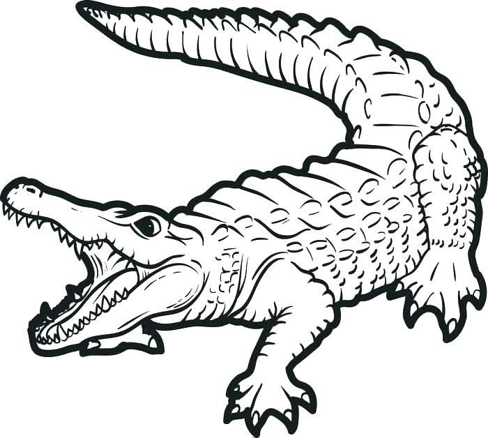 700x628 Alligator Coloring Pages Collection Cute Alligators P Dexyarya
