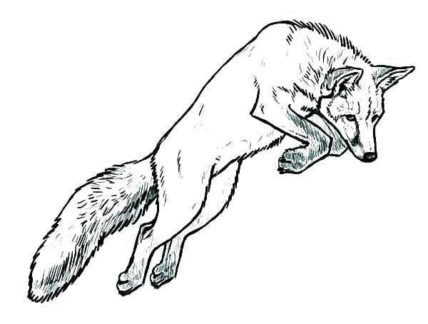 600x454 Coloring Pages Of Foxes Baby Fox Coloring Pages Fox Coloring Book