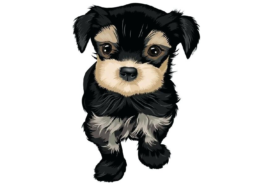 900x600 Cute Puppy Drawings Cute Puppy Drawings Realistic