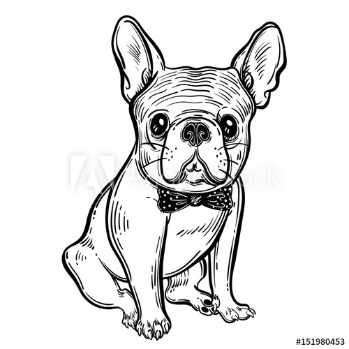 500x500 Cute Vector Illustration With French Bulldog A Domestic Dog