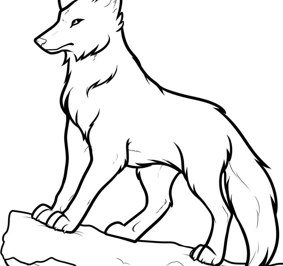 957x900 Wolf Drawings Drawing Easy Bire Com Howling Gif In Pencil