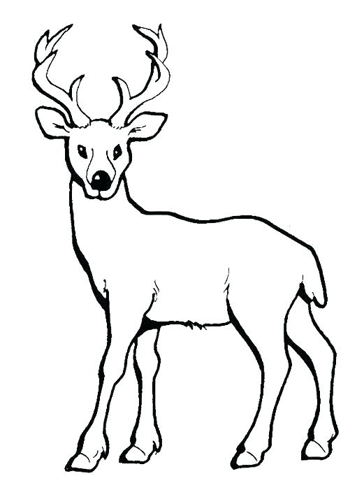 521x701 Cute Deer Coloring Pages Baby With Long Horn Design Jadoxuvale Top