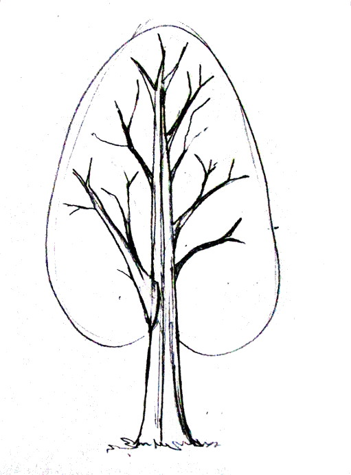 511x690 How To Draw A Tree
