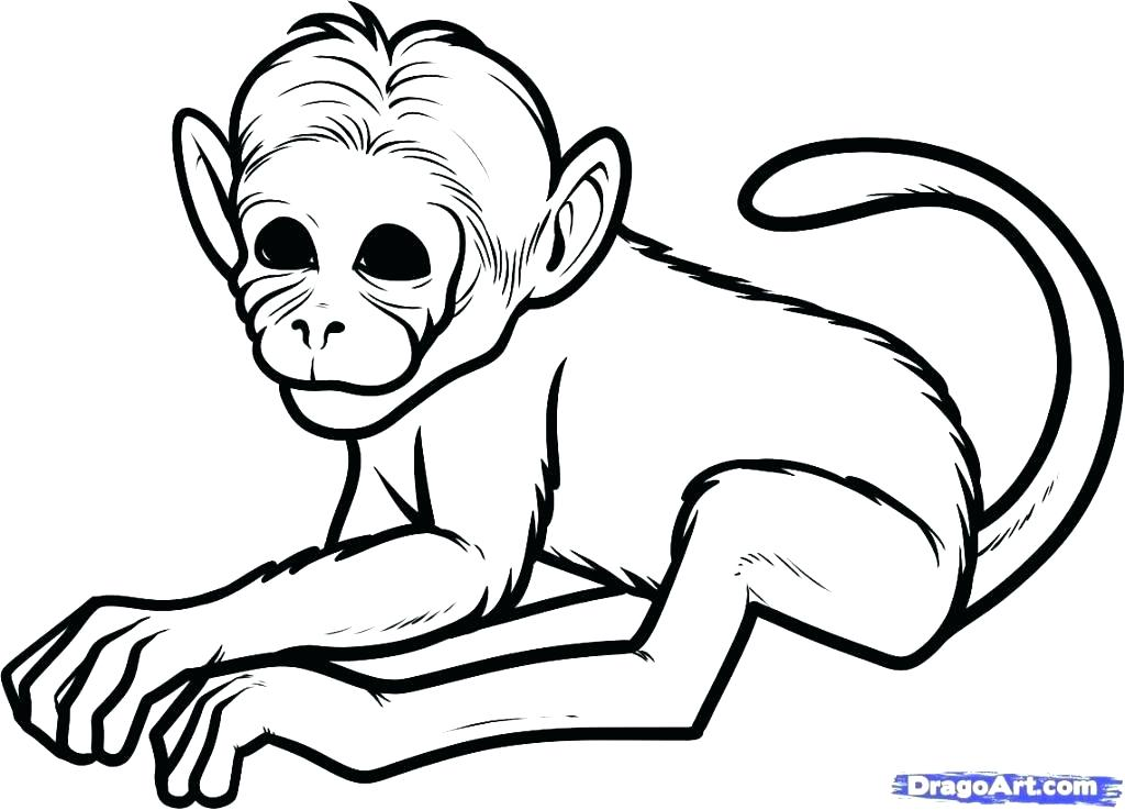 1024x737 Monkey Drawing Easy Baby Drawing Easy Monkey How To Draw A Step