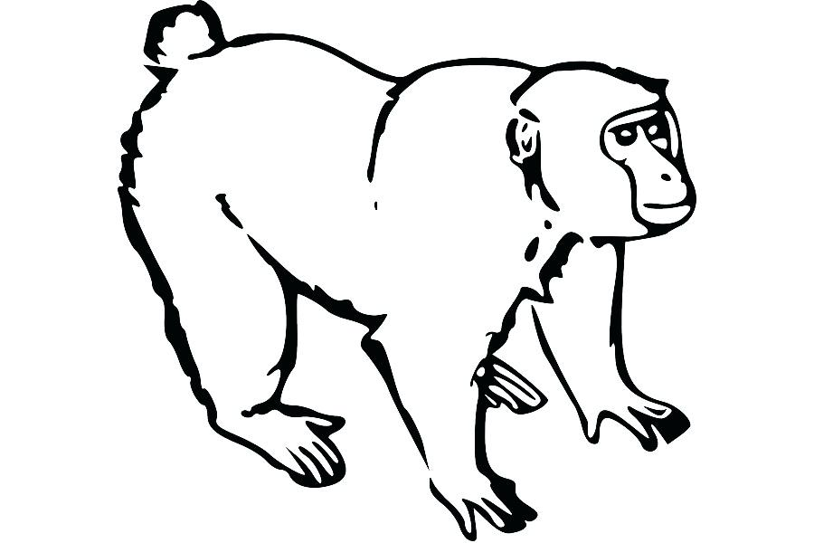 900x600 A Drawing Of A Monkey