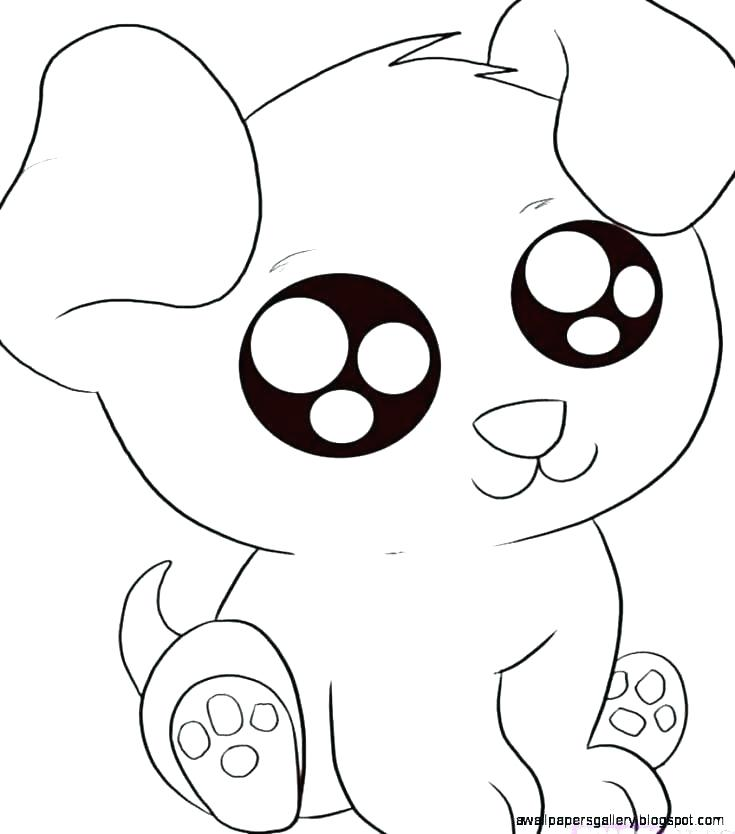 735x834 Animal Drawing Step