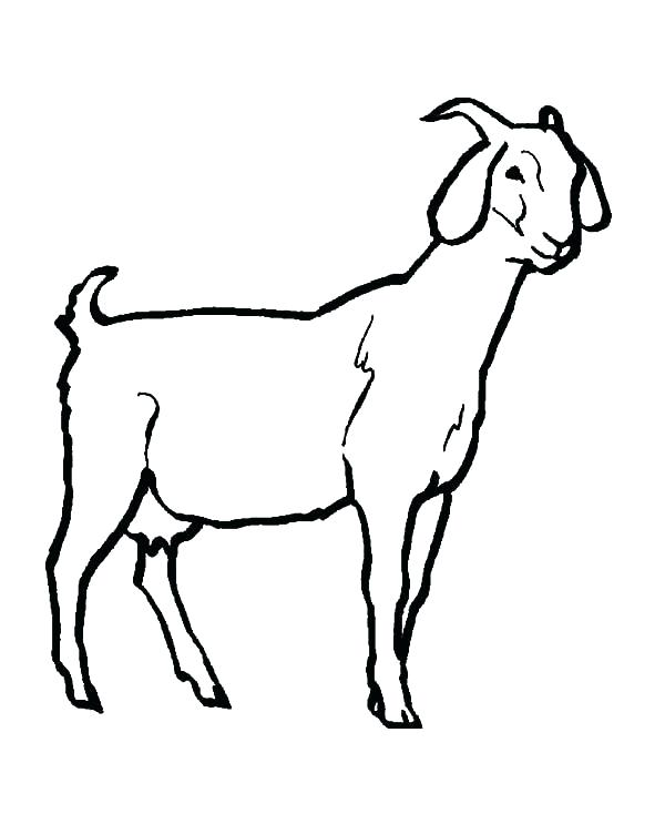600x734 goat coloring pages goat coloring pictures goat coloring