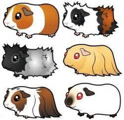 250x241 Here You'll Find A Selection Of Cartoon Guinea Pig Products