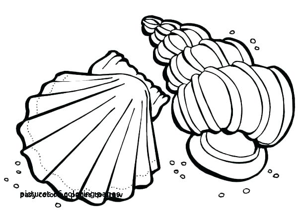 600x442 Cute Pig Coloring Pages