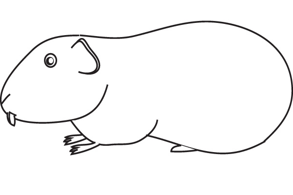 600x400 Coloring Guinea Pig