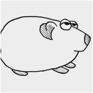 300x300 guinea pig coloring pages best pin cute hamster guinea pig big
