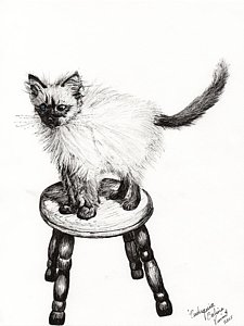 225x300 Cute Kitten Drawings Pixels