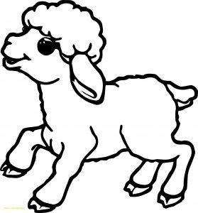 Cute Lamb Drawing